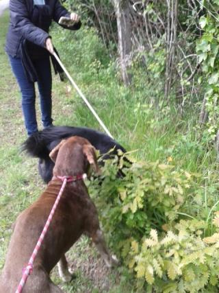 Photos des chiens d'Ecuras Promen12