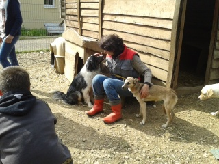 Photos des chiens d'Ecuras Vue_d_13