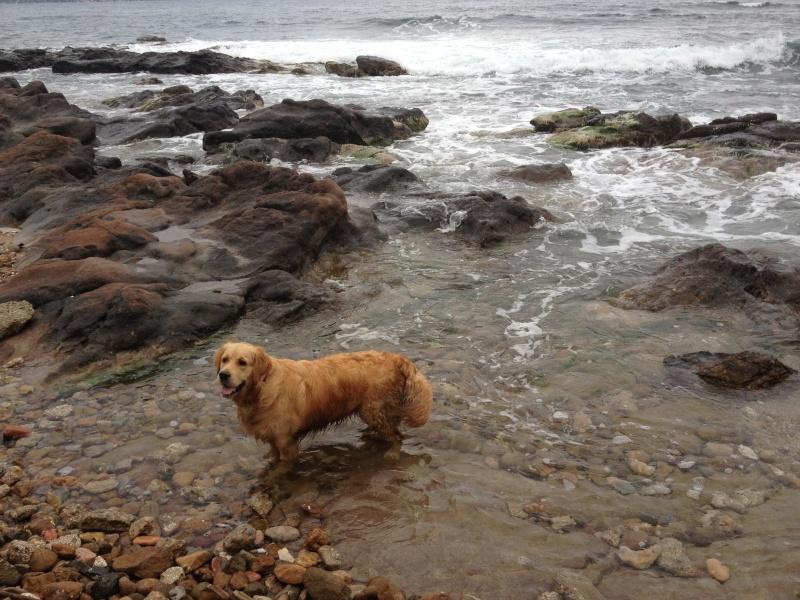 Photo de vos chiens à la plage! - Page 2 Img_1910