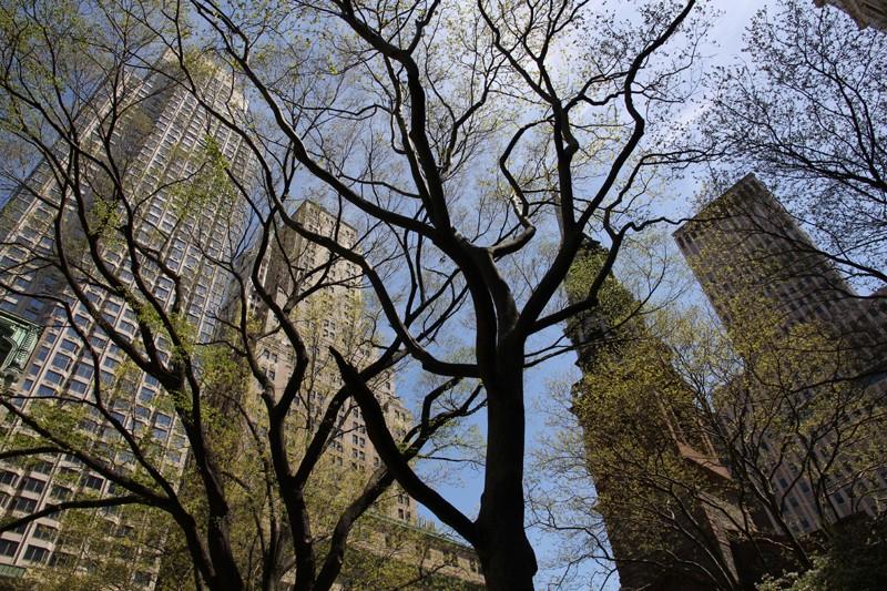 Souvenir de NYC Img_1510