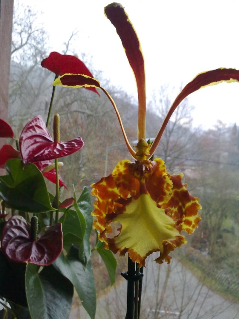 Orchideen Hennis - Ein weiterer Tag im Paradis <3 19112014