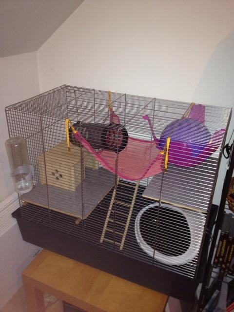 Première cage Photo25