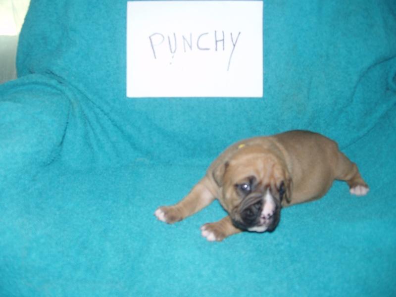 bébé punchy 23_mai14