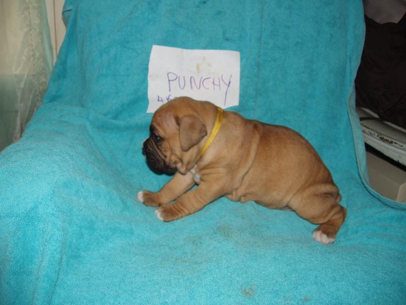 bébé punchy P1010121
