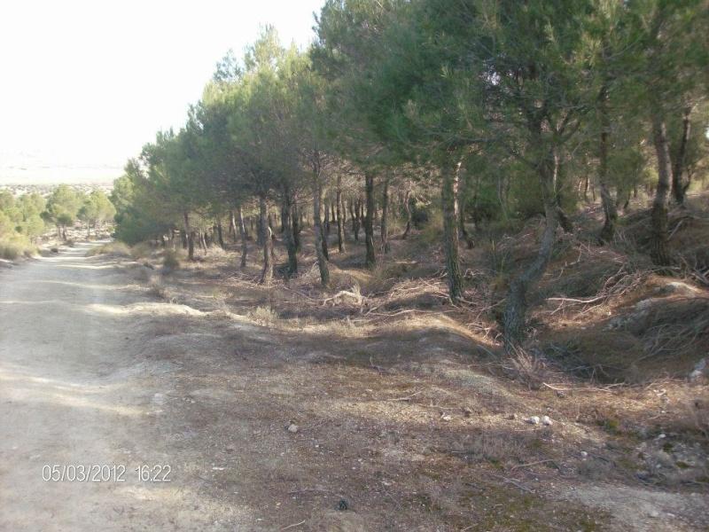 Fotos Sector 1 Campo110