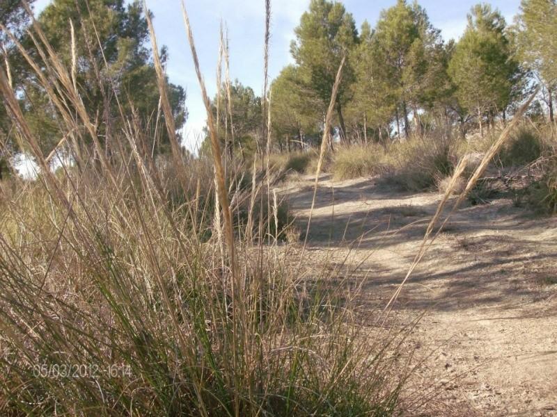 Fotos Sector 1 Campo115