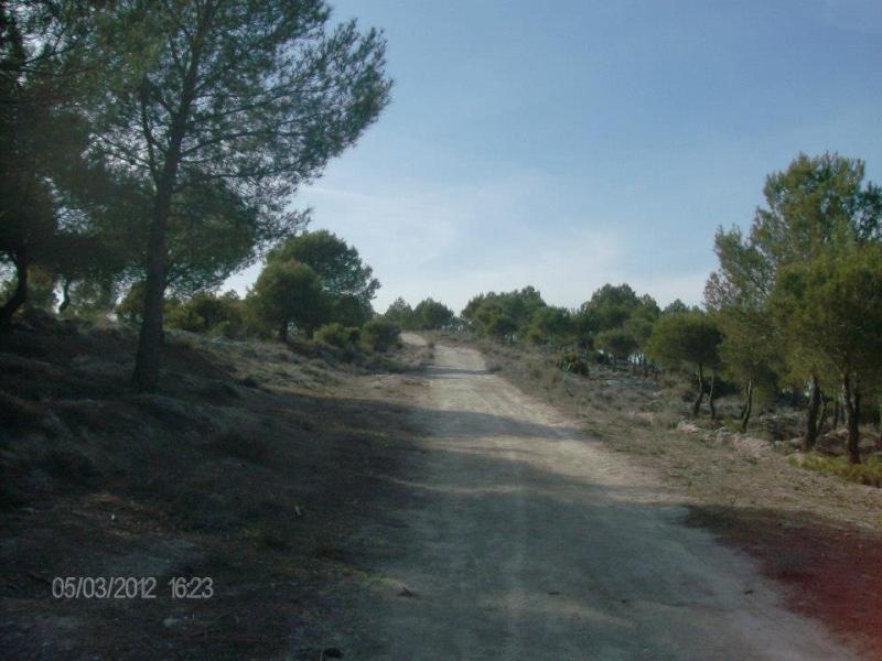 Fotos Sector 1 Campo410