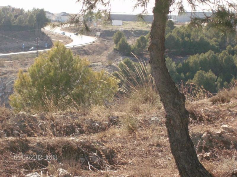 Fotos Sector 1 Campo910