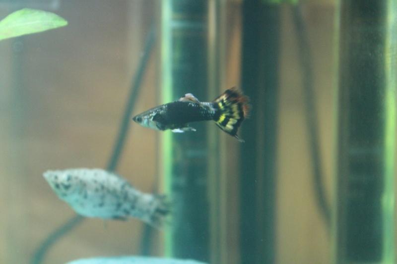 mon rikiki aquarium de 25 L  Img_4318