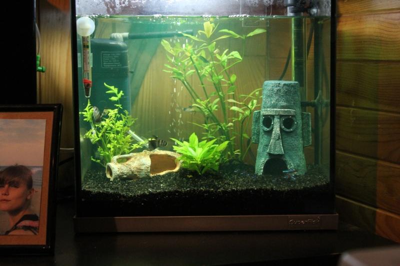 mon rikiki aquarium de 25 L  Img_4320