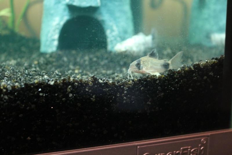mon rikiki aquarium de 25 L  Img_4323