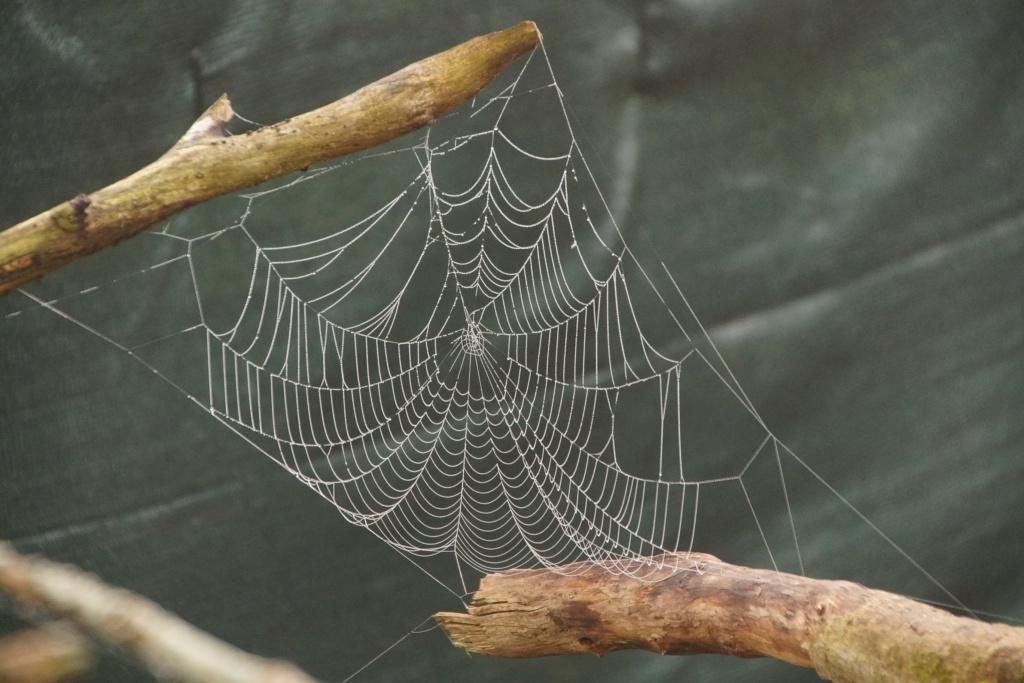 [Fil ouvert] Toile d'araignée Dsc00129
