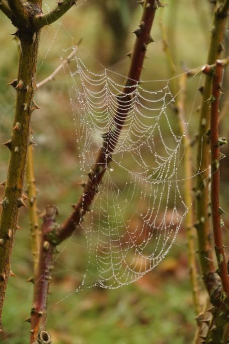 [Fil ouvert] Toile d'araignée Dsc00130