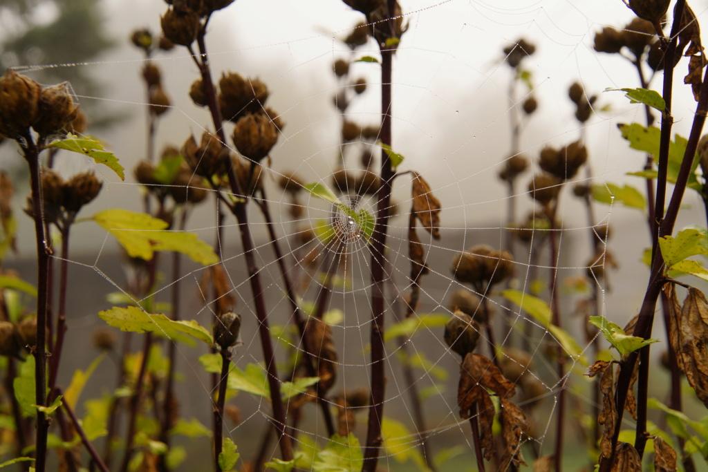 [Fil ouvert] Toile d'araignée Dsc00132