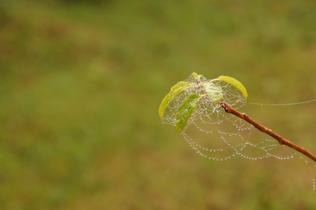 [Fil ouvert] Toile d'araignée Dsc00133