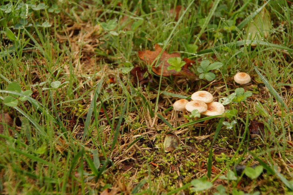 [fil ouvert] les champignons - Page 10 Dsc00134