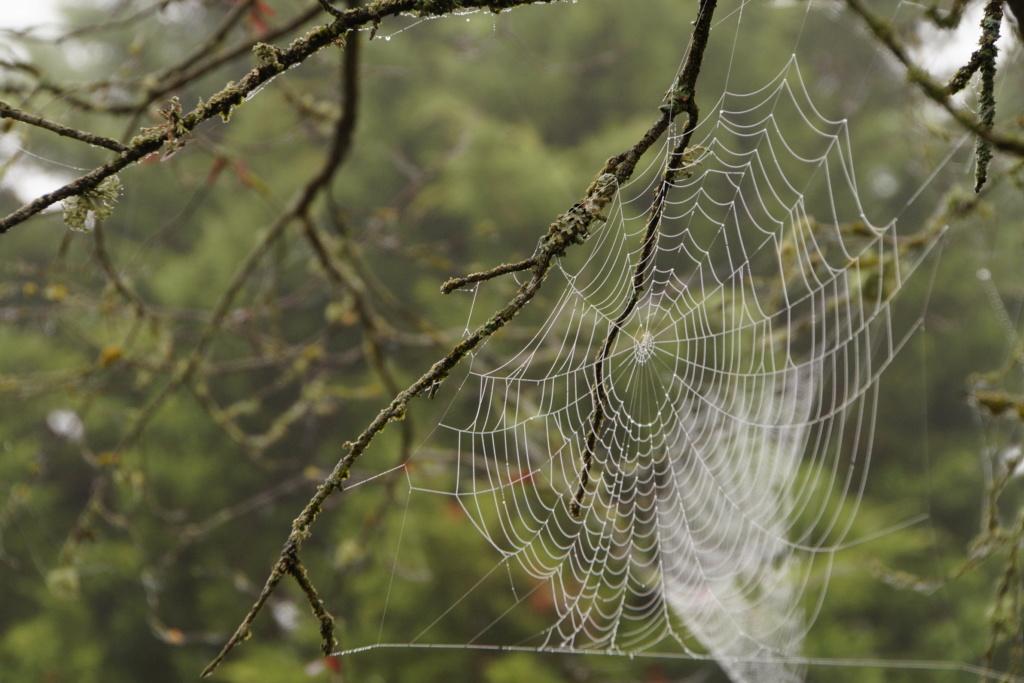 [Fil ouvert] Toile d'araignée Dsc00135