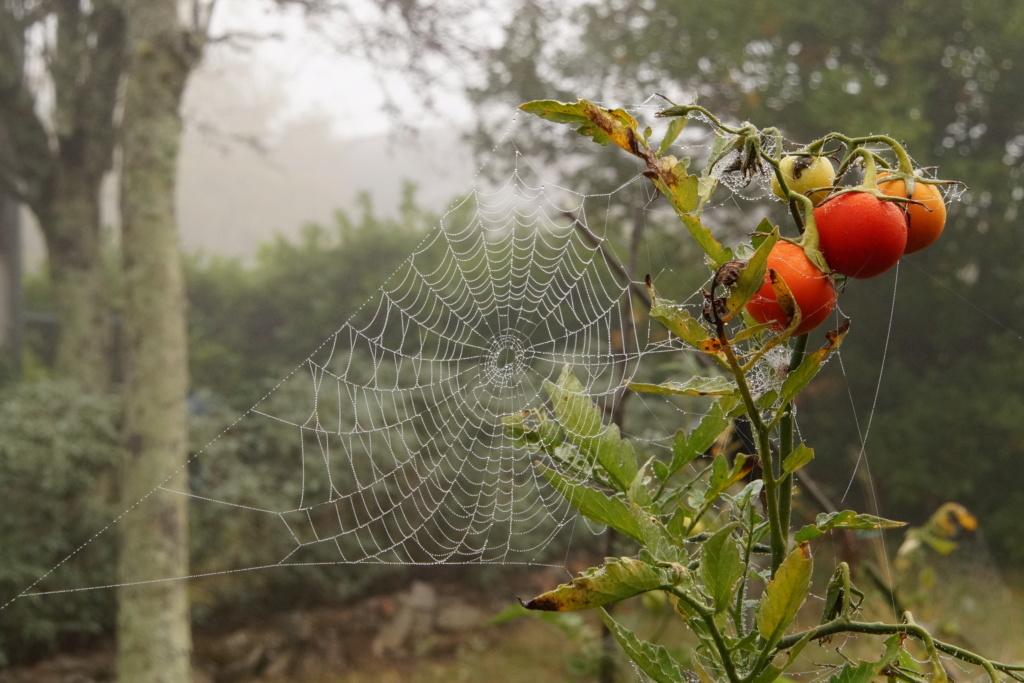 [Fil ouvert] Toile d'araignée Dsc00136