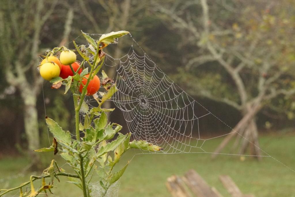 [Fil ouvert] Toile d'araignée Dsc00137