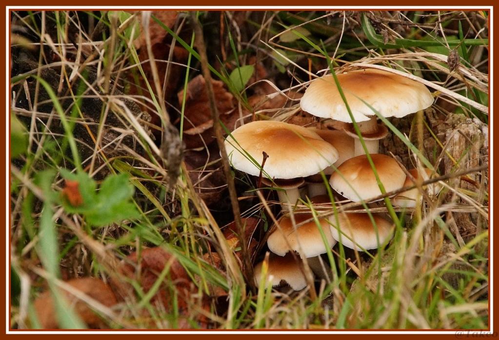 [fil ouvert] les champignons - Page 10 Dsc00142
