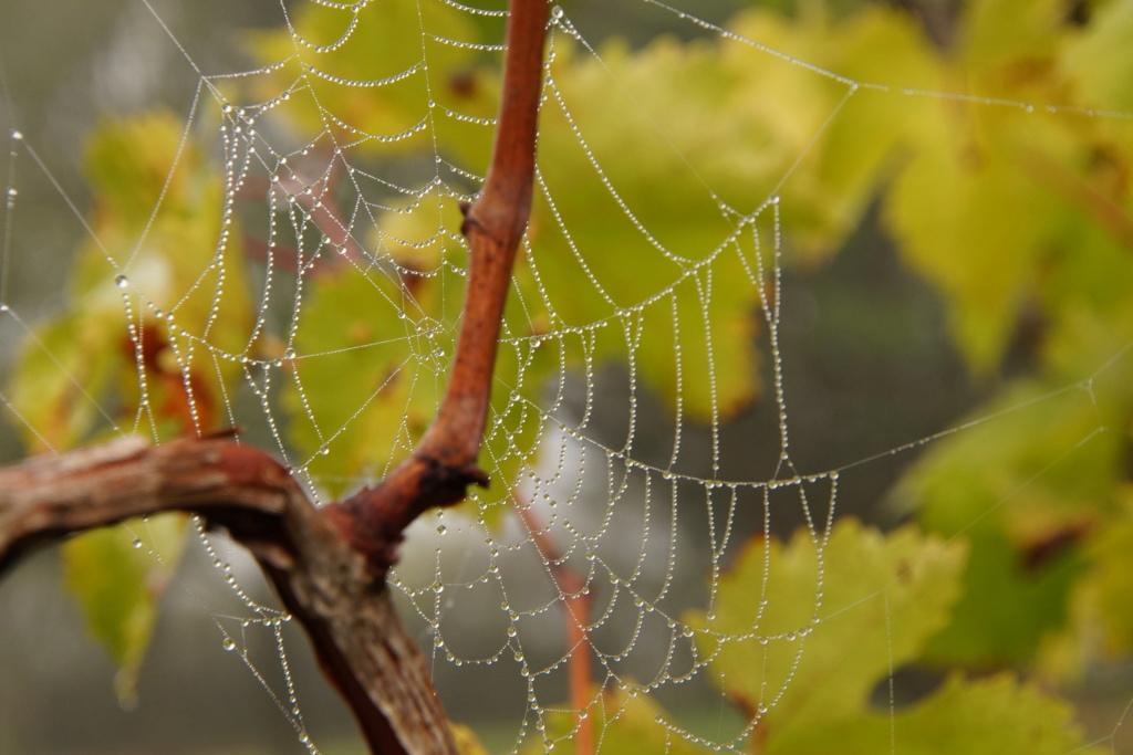 [Fil ouvert] Toile d'araignée Dsc00211