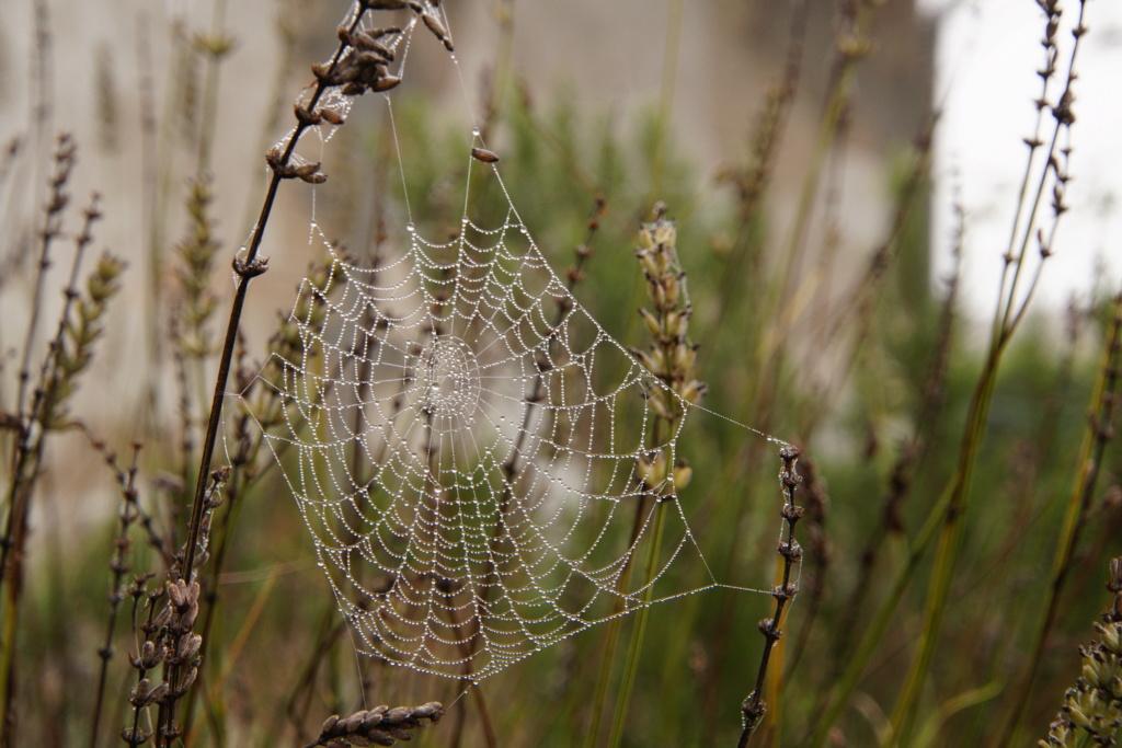 [Fil ouvert] Toile d'araignée Dsc00212