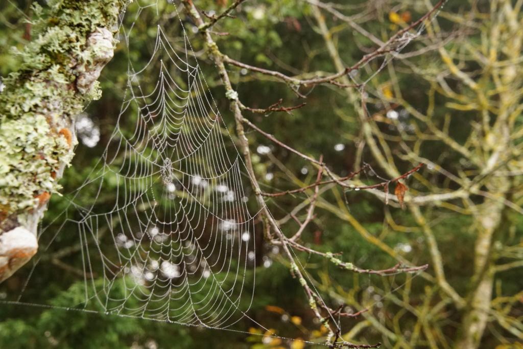 [Fil ouvert] Toile d'araignée Dsc00214