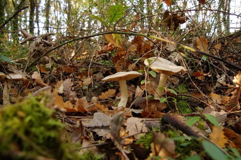 [fil ouvert] les champignons - Page 11 Dsc00235