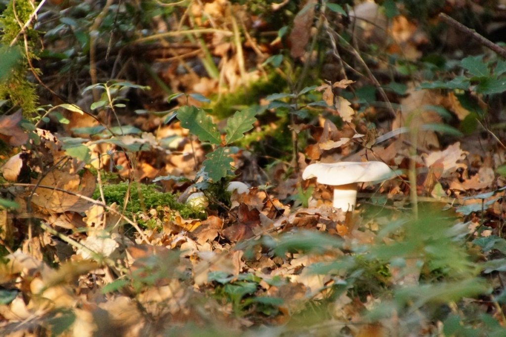 [fil ouvert] les champignons - Page 11 Dsc00236