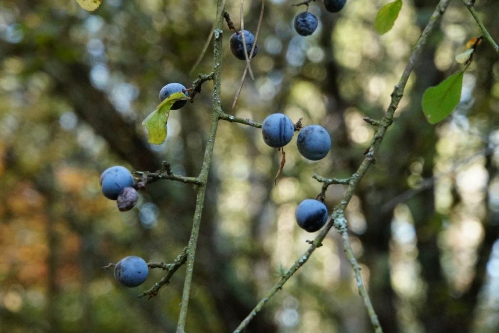 [Fil ouvert] Fruit sur l'arbre - Page 11 Dsc00237