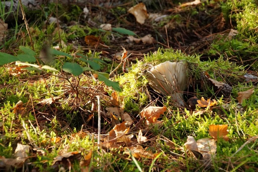 [fil ouvert] les champignons - Page 11 Dsc00317