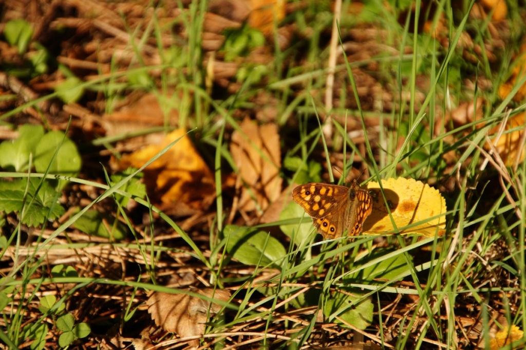 Fil ouvert - Proxi - Papillons - Page 11 Dsc00318