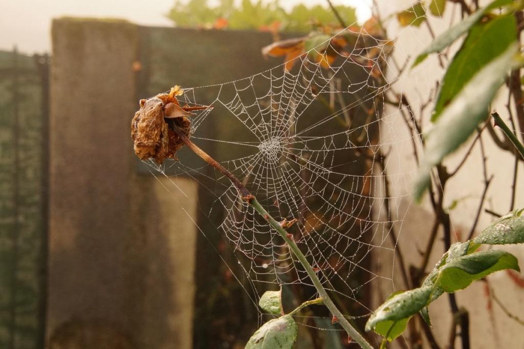 [Fil ouvert] Toile d'araignée Dsc00320