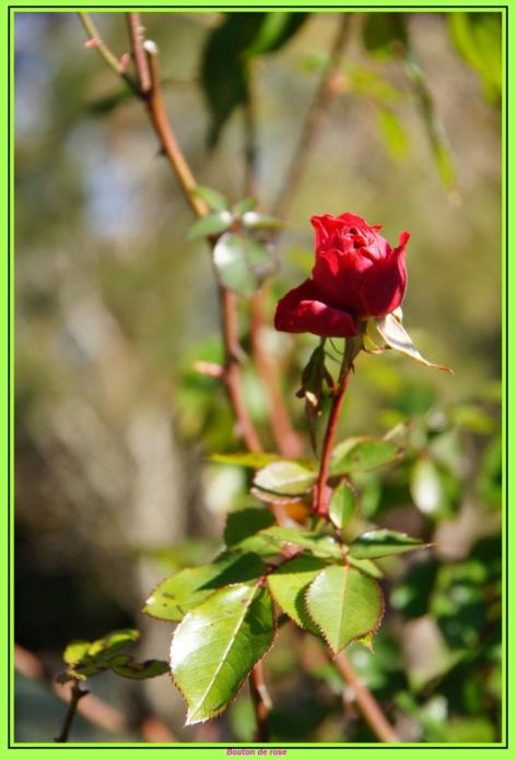[Fil ouvert] Fleurs et plantes - Page 10 Dsc00423