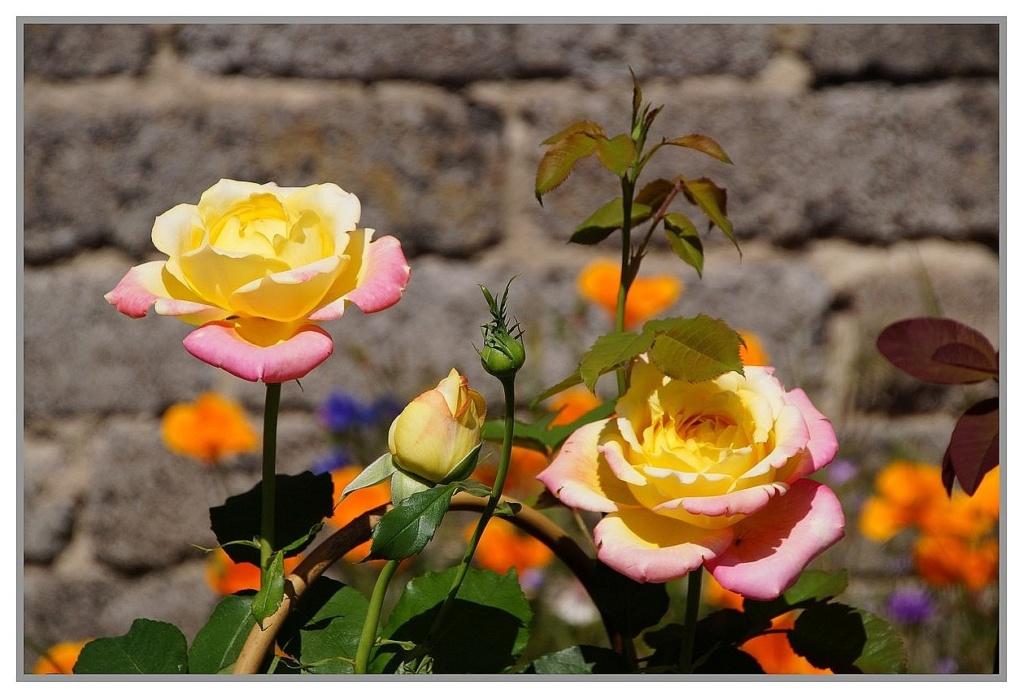 Thème du mois d'octobre 2019 :   Fleurs et jardins  Dsc00640