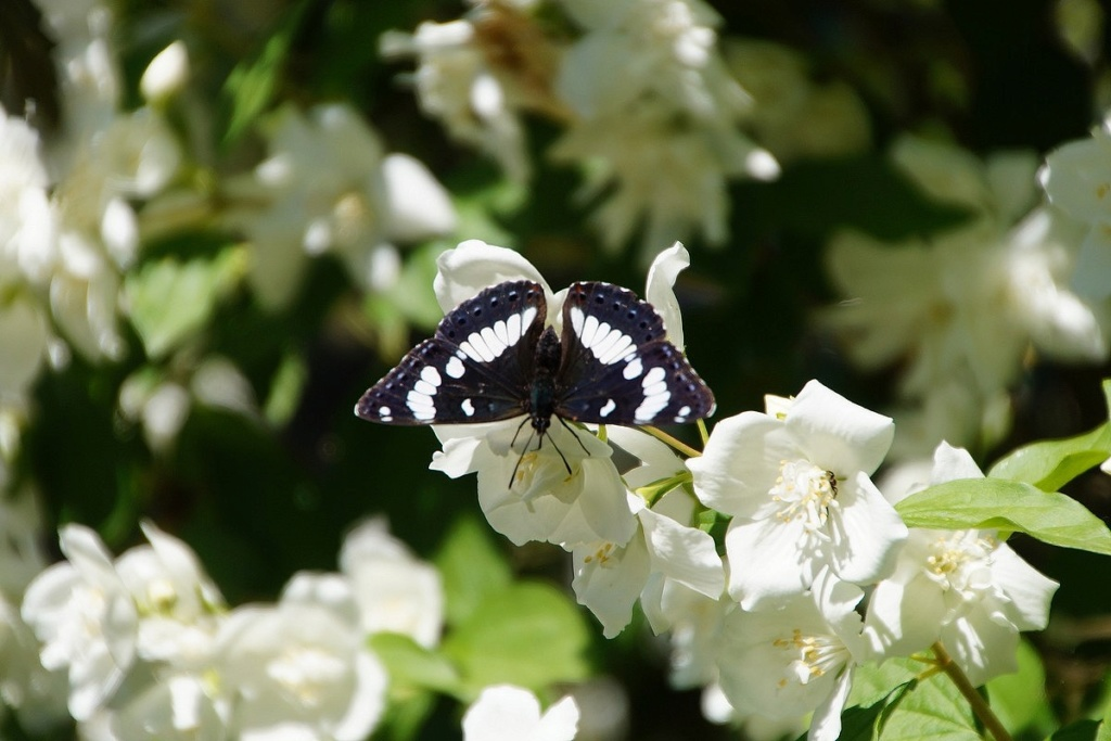 Fil ouvert - Proxi - Papillons - Page 11 Dsc01021