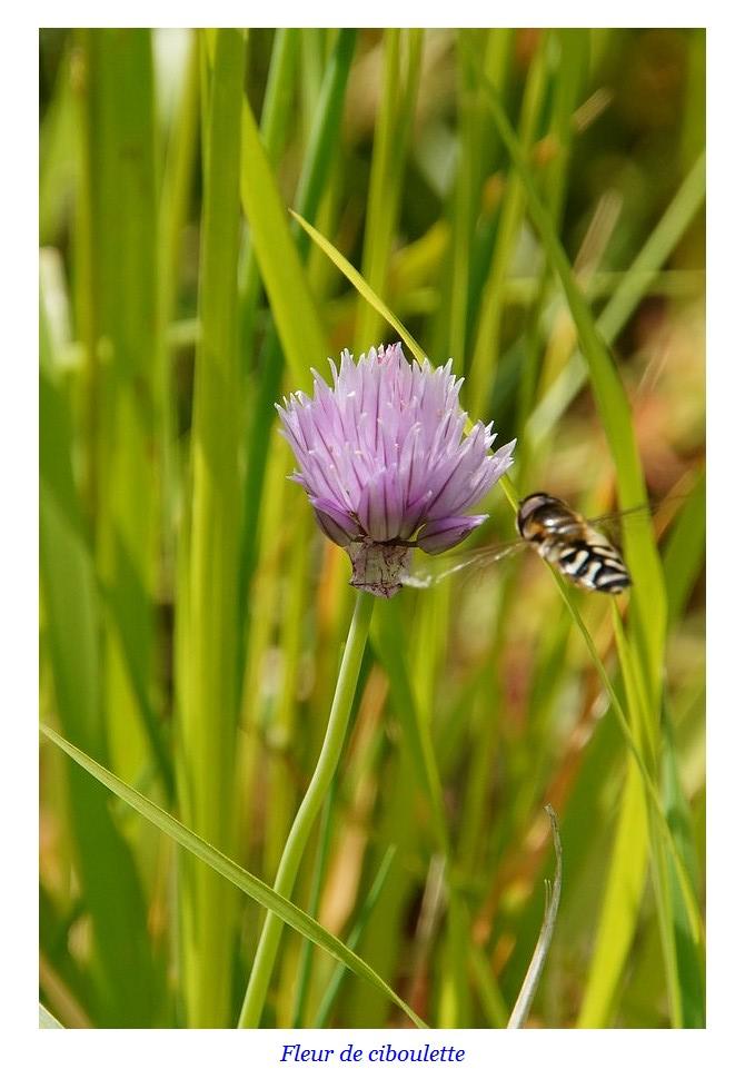 [Fil ouvert] Fleurs et plantes - Page 17 Dsc01133