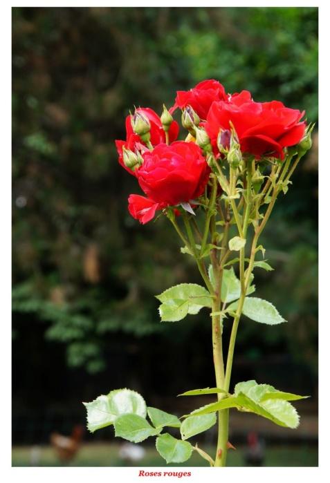 [Fil ouvert] Fleurs et plantes - Page 17 Dsc01134