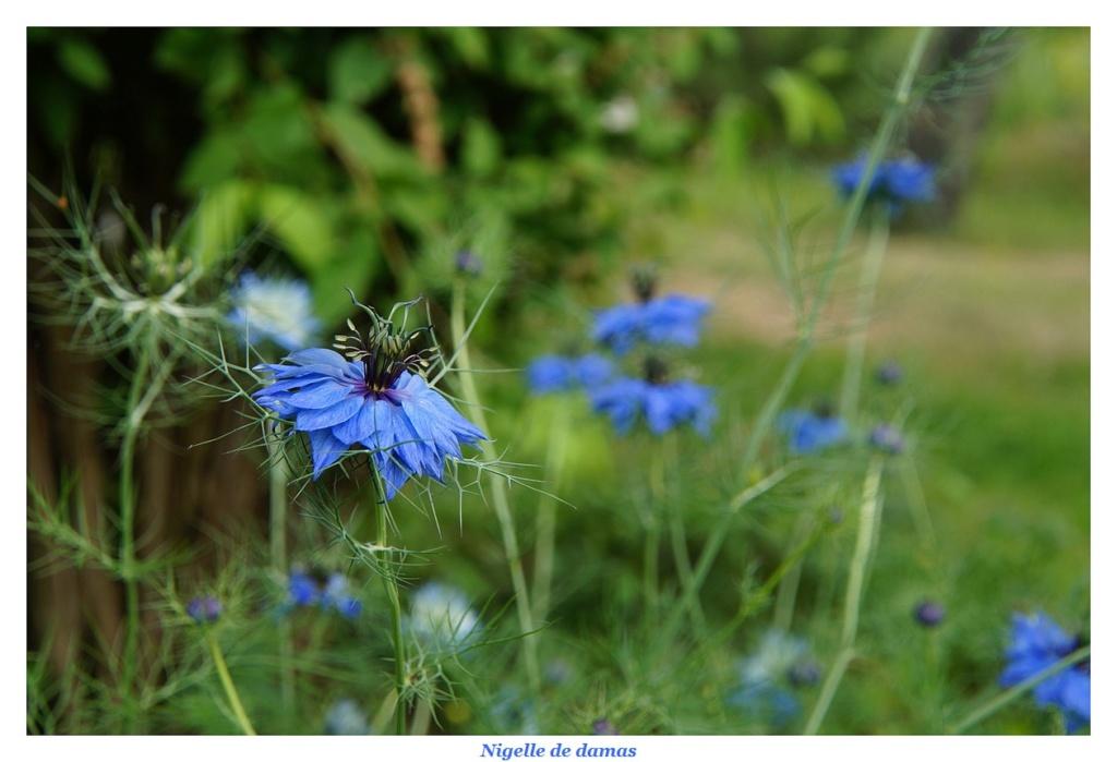 [Fil ouvert] Fleurs et plantes - Page 17 Dsc01210