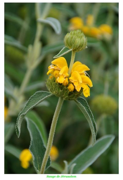 [Fil ouvert] Fleurs et plantes - Page 17 Dsc01211