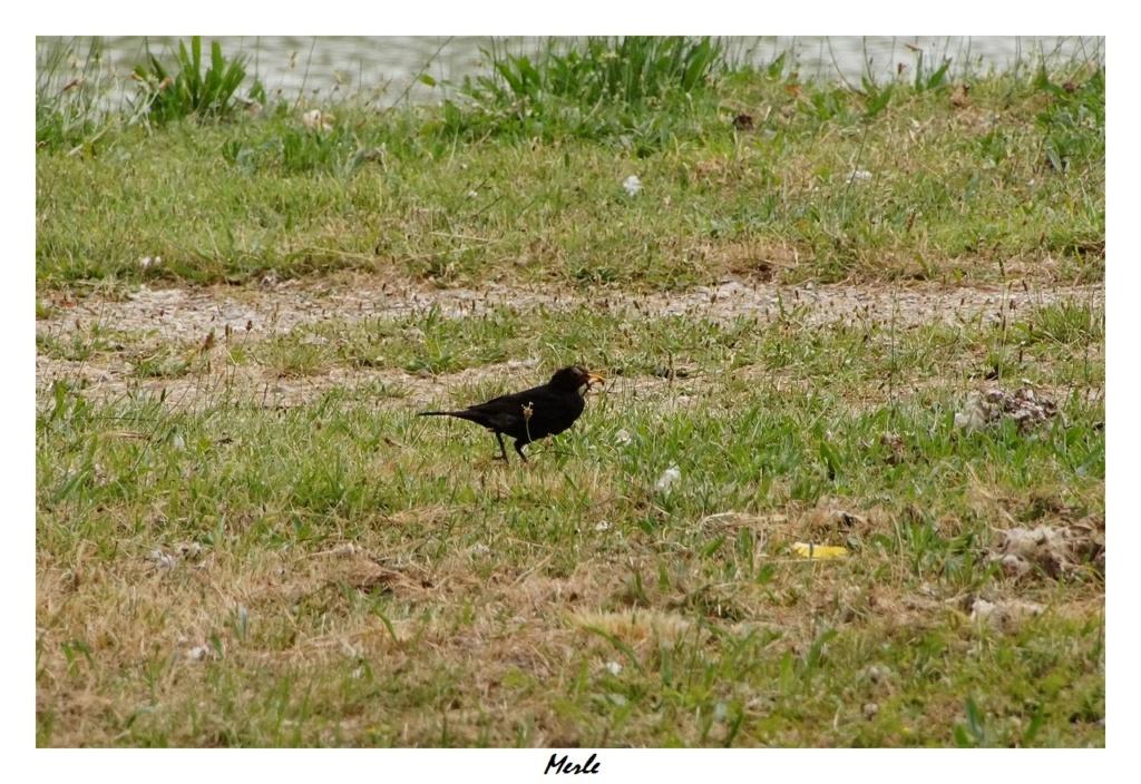 [Ouvert] FIL - Oiseaux. - Page 32 Dsc01250