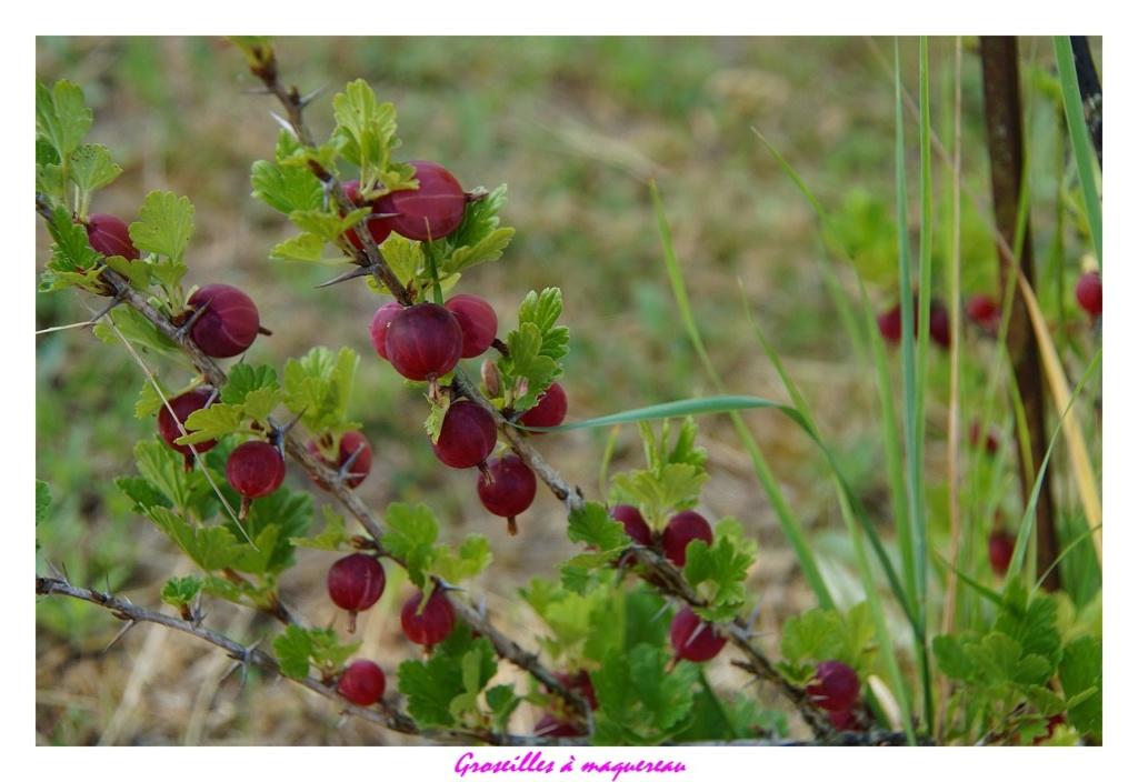 [Fil ouvert] Fruit sur l'arbre - Page 12 Dsc01258