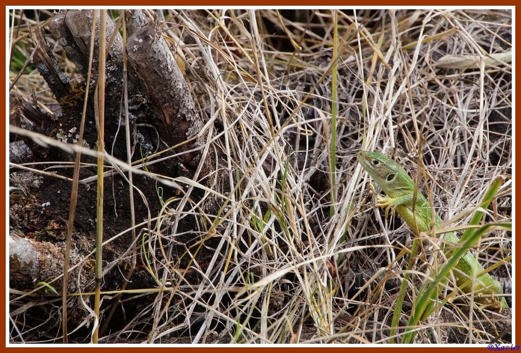 [Fil ouvert à tous] Reptiles, serpents, tortues, amphibiens, ... - Page 11 Dsc01951