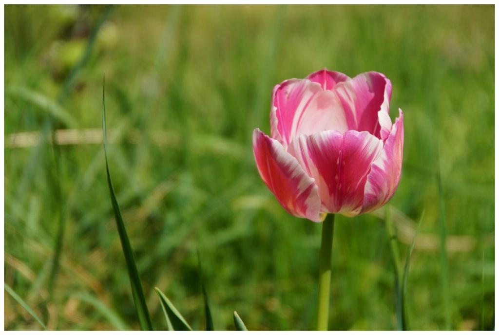[Fil ouvert] Fleurs et plantes - Page 24 Dsc02523
