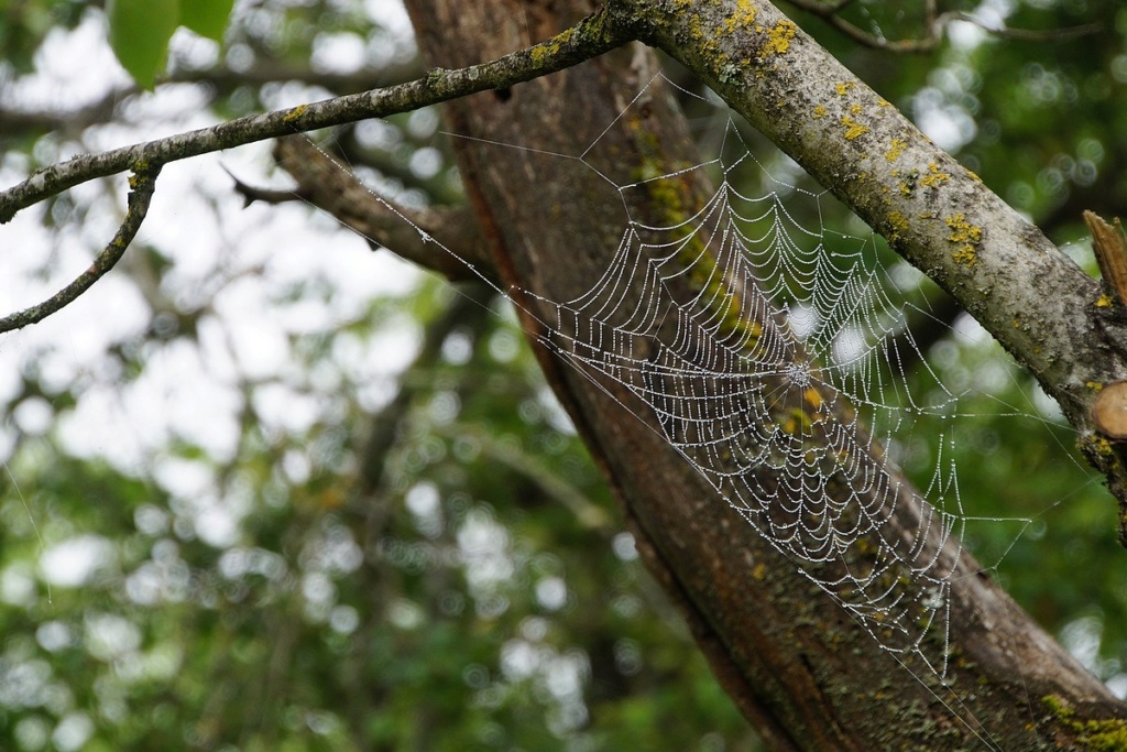 [Fil ouvert] Toile d'araignée - Page 2 Dsc02639