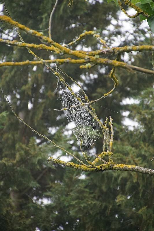 [Fil ouvert] Toile d'araignée - Page 2 Dsc02640
