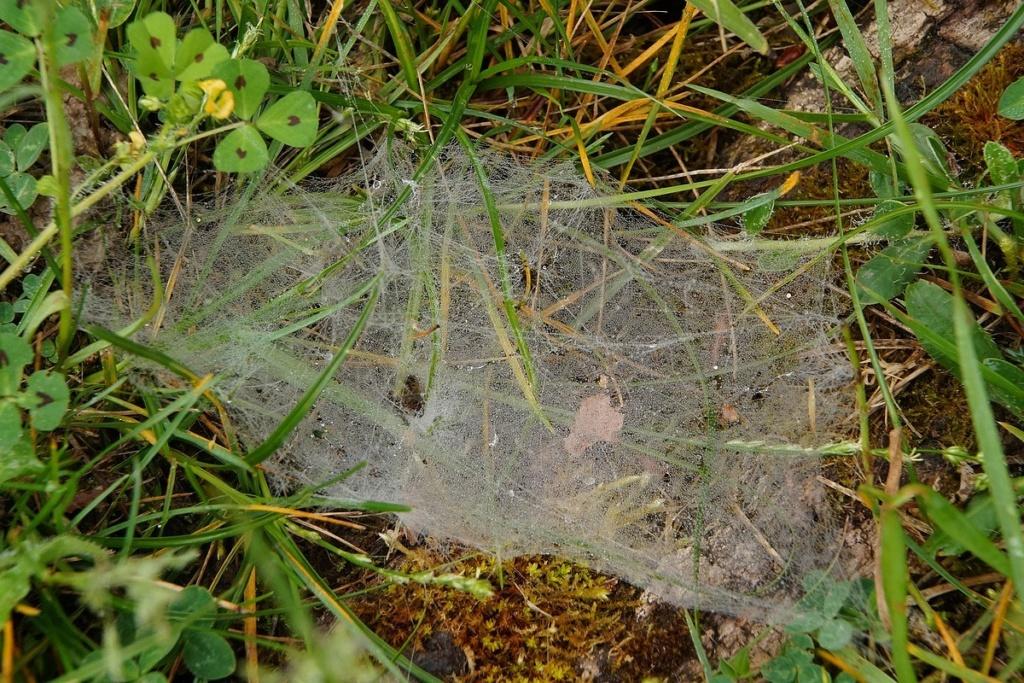 [Fil ouvert] Toile d'araignée - Page 2 Dsc02642