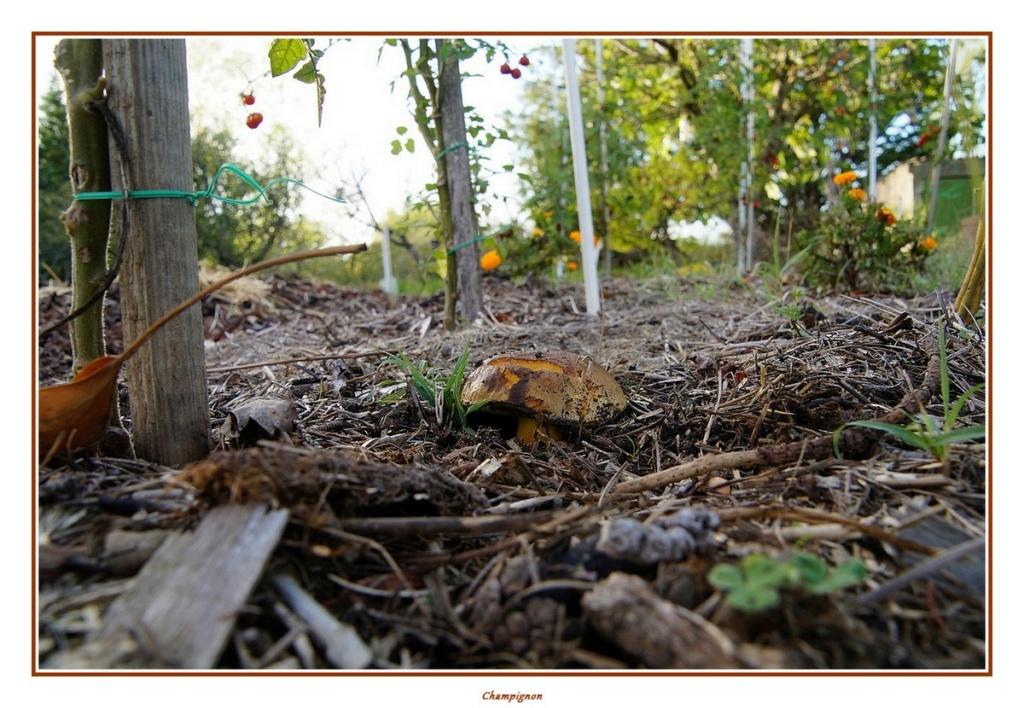 [fil ouvert] les champignons - Page 18 Dsc04158