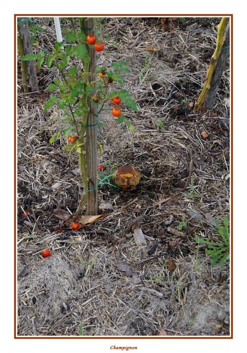 [fil ouvert] les champignons - Page 18 Dsc04159