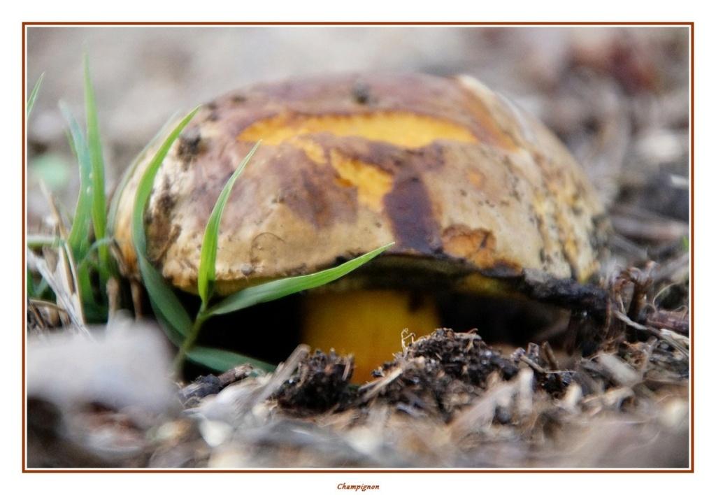 [fil ouvert] les champignons - Page 18 Dsc04161